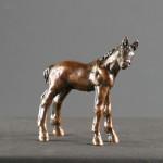 Little Percheron Colt